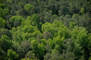 Aerial of trees
