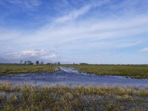 flooded soybean field