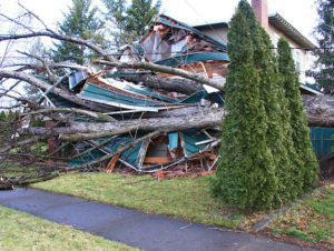 Cover photo for Dealing With Storm Damage in the Landscape