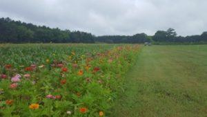 flower border around field