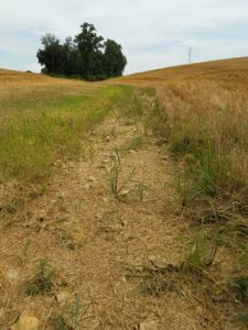 Drainage ditch showing erosion