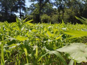 diverse plant cover
