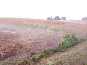 biodiverse border still growing
