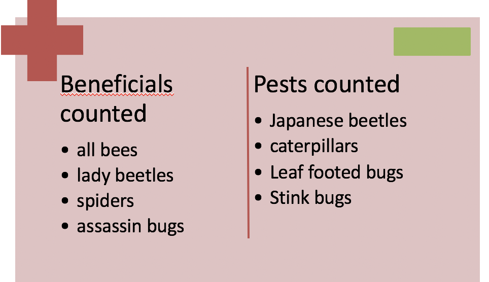 insects counted