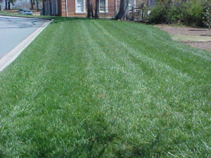 Lawn with striped mowing