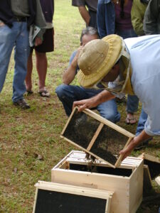 Cover photo for Installing a New Package of Bees? Here's a New Tip to Improve Acceptance