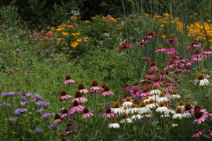 Cover photo for Register Now for October CCP Meeting About Healthy Yard Alternatives